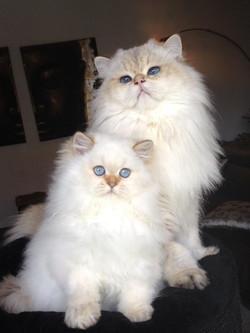 Mushu et ma belle Harielle....