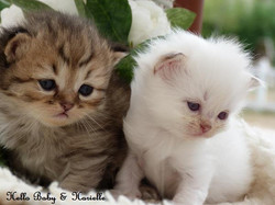 Amours de chatons
