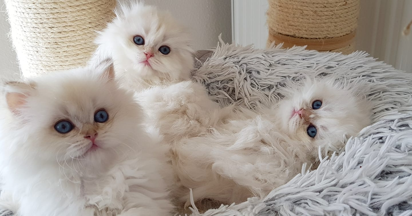 Les chatons ont 3 mois