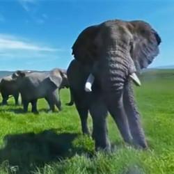La vallée des éléphants