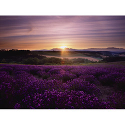 lavendar sunset.jpg