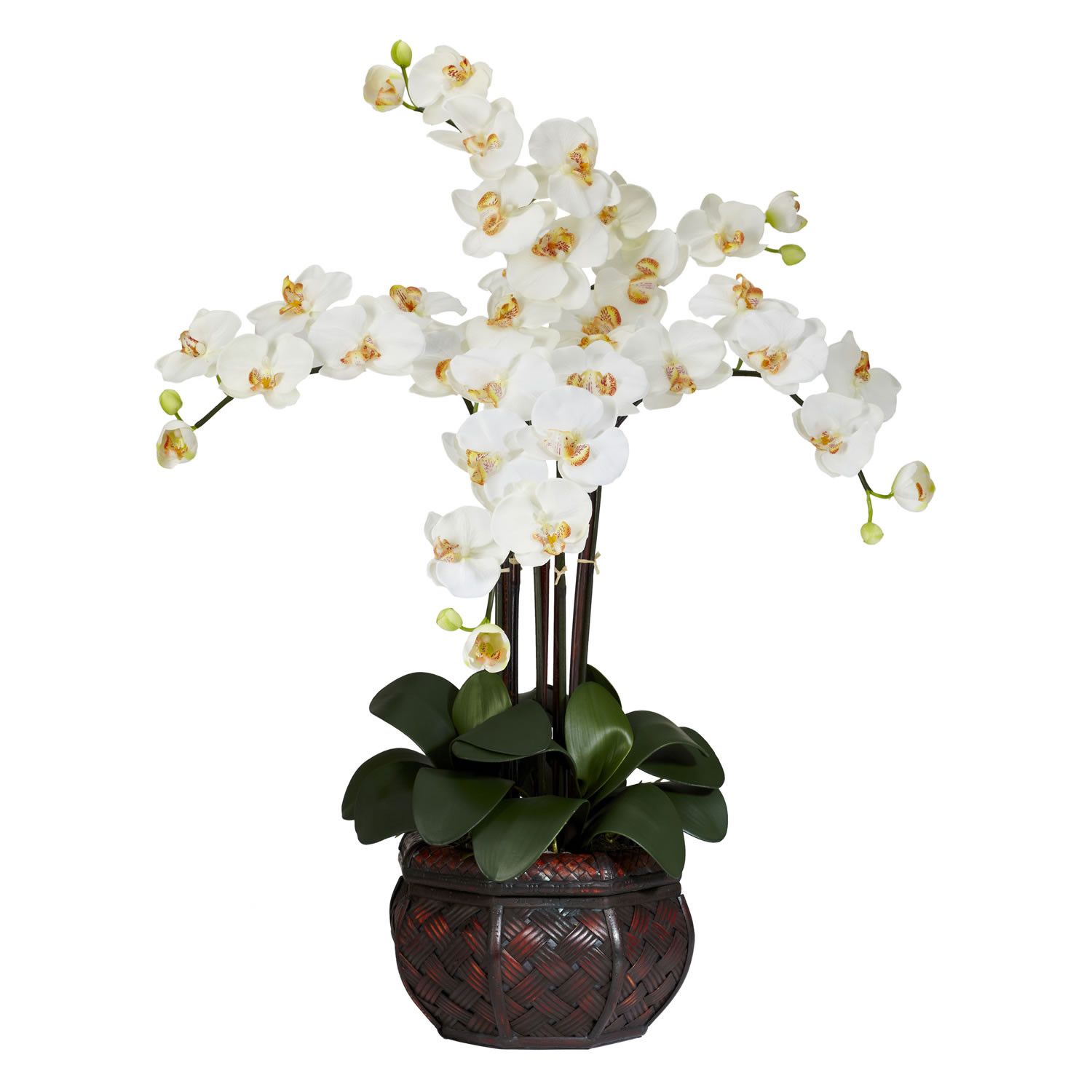 Nearly-Natural-Phalaenopsis.jpg
