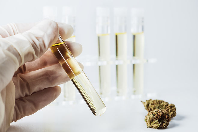 Florida-cannabis-lab-tests.jpg