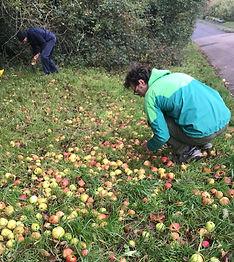 apple picking.jpg