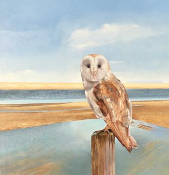 Barn Owl  -                  Sold  acrylic on canvas 62x62cm