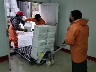 Empresa Blue Shell donó 6 mil 500 kilos de choritos a la población de Queilen