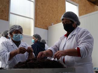 Algueras de Queilen elaboran alimentos saludables con agar-agar