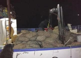 En Queilen se incautaron 2.5 toneladas de almeja