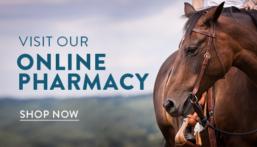 shop now horse image.png