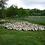 Thumbnail: Gésiers de volaille confits - 350g
