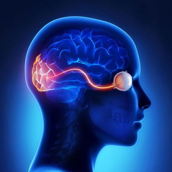 O ESSENCIAL DA NEUROFTALMOLOGIA - 13 MÓDULOS