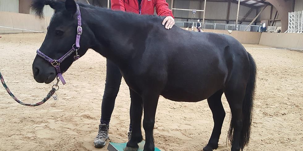 Physiotherapie und Krankengymnastik für Pferde