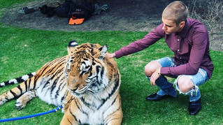 Lions And Tigers And BIEBERS, Oh my!