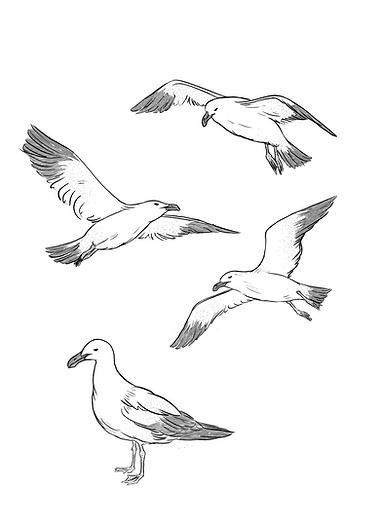 TBF - Interiors - MAY 2019 - seagulls.pn