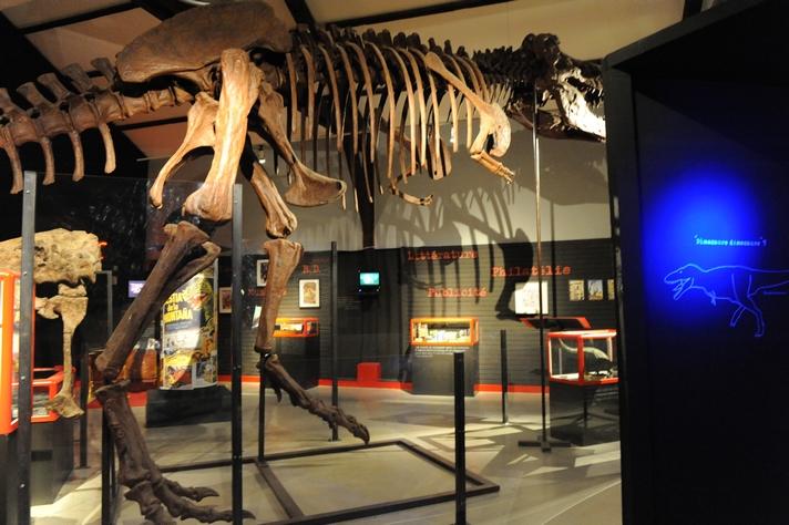 Musée de dinosaures