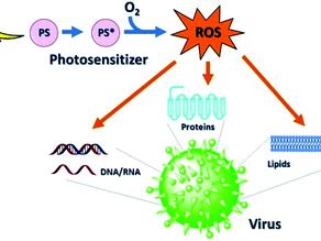 RAYPURE LIGHT deactivates SARS-CoV-2 Virus