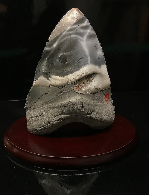 Small Tooth Sculpture