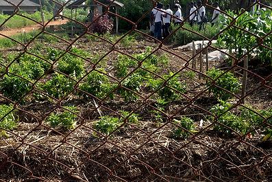 Autarcique Bio-Landwirtschaft, Togo, Ausbildung, Junge Menschen