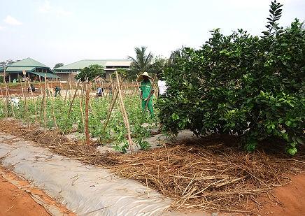 Autarcique, Bio-Landwirtschaft, Ausbildung