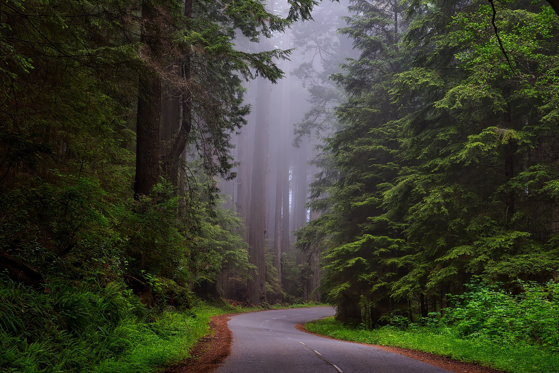 redwood-national-park-1587301_1920