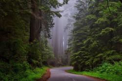 redwood-national-park-1587301_1920