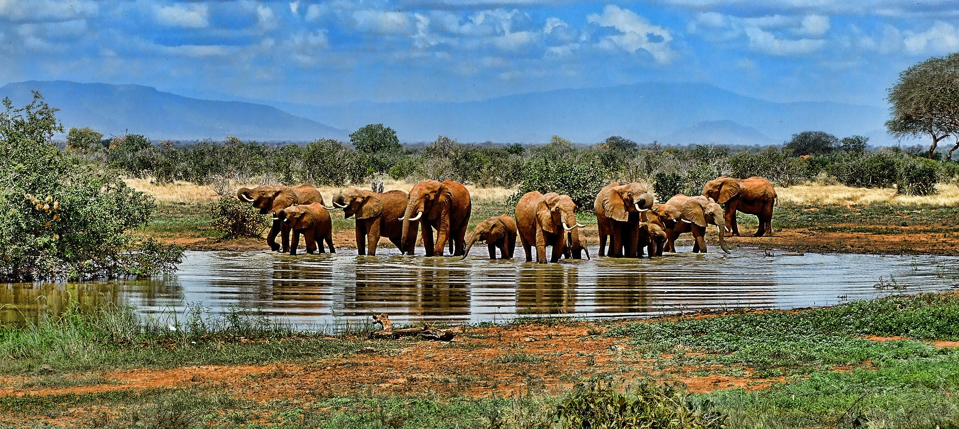 elephant-watering hole - pixabay1065632_