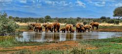 elephant-watering hole - pixabay1065632_