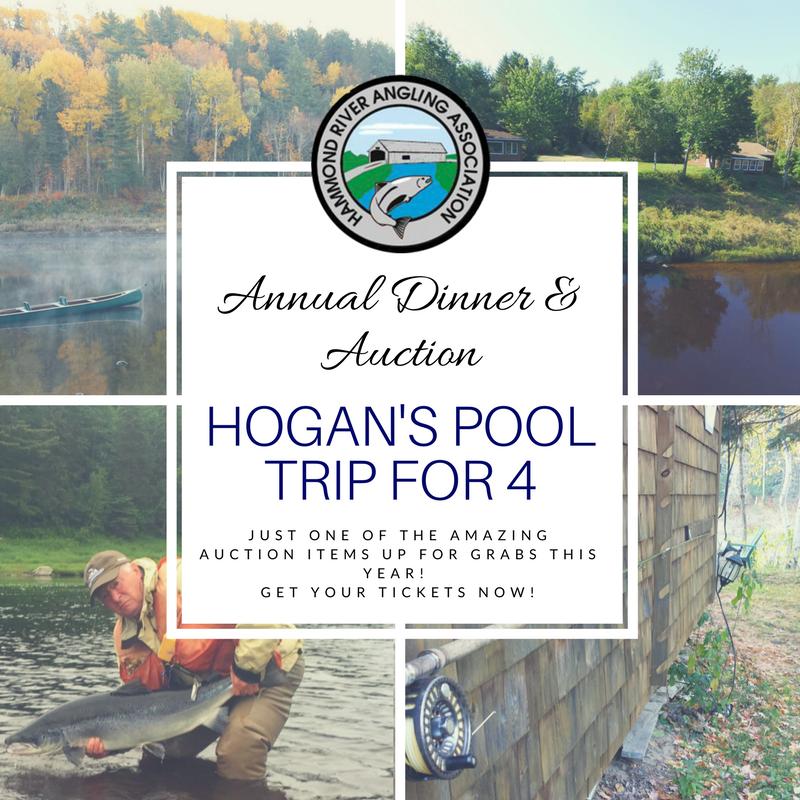 Hogans Pool Trip