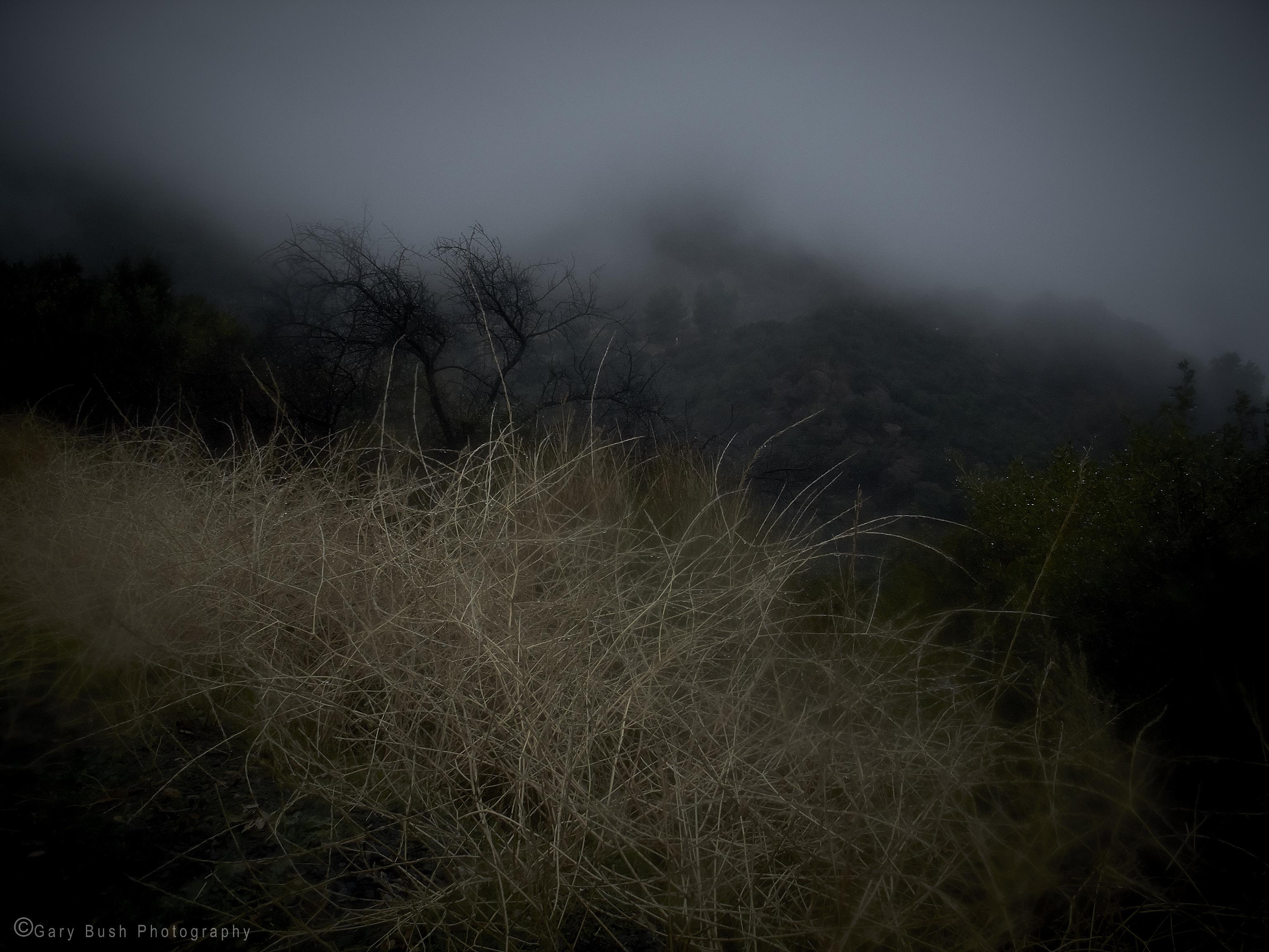 Dry Grass in Rain