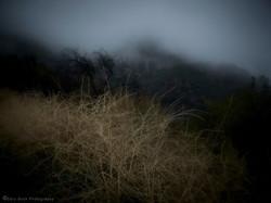 Dry Mountain Grass in the Rain