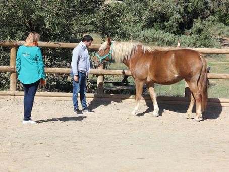 En équicoaching, le cheval n'est pas le coach