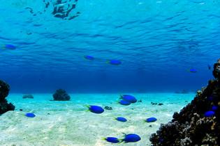 Tahiti_Aquario.jpg