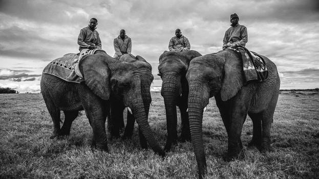 Elefantes I.jpg