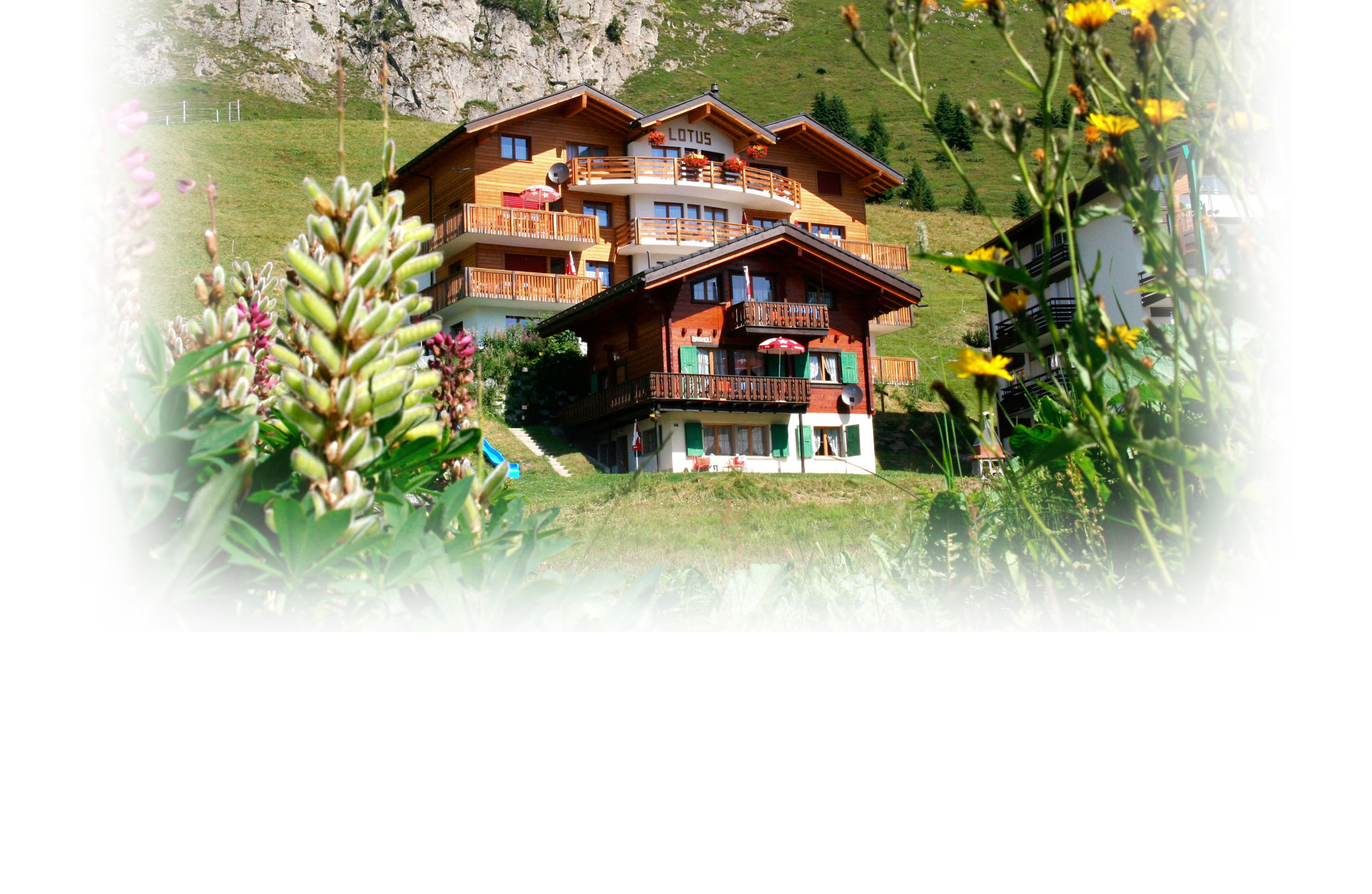 ALETSCH-APARTMENTS-Lotus.jpg