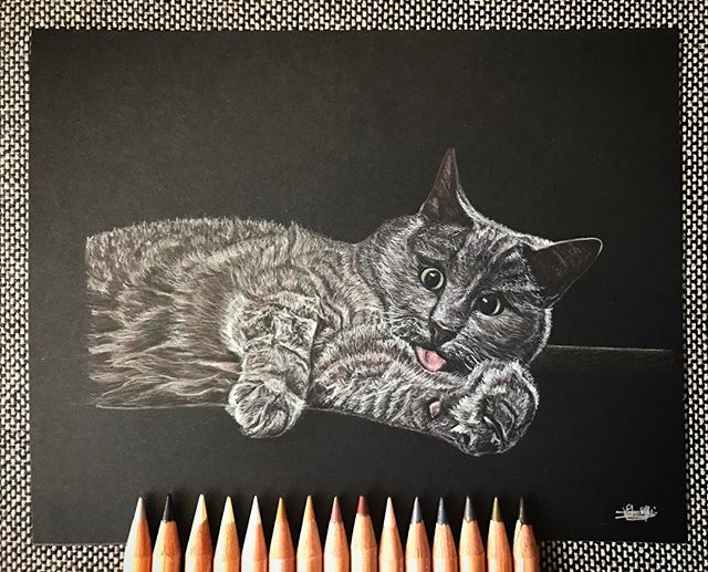 Un chat joueur