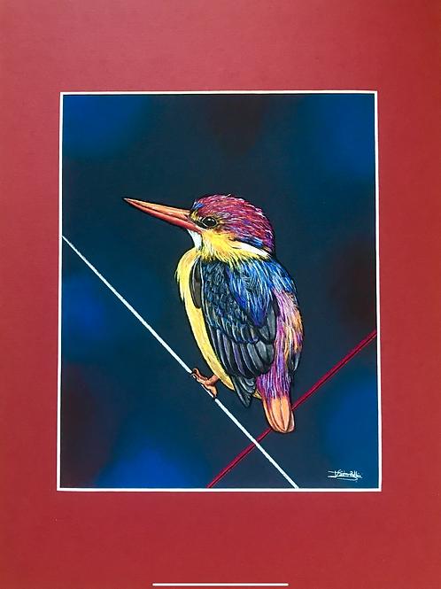 Martin-pêcheur coloré