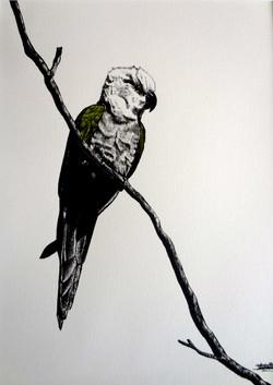 Le vert et le perroquet