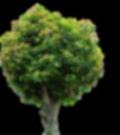 large tree