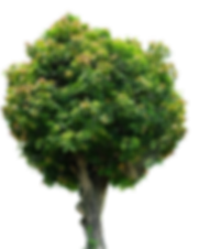 tree-images