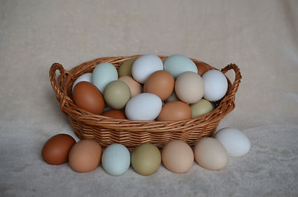 Eggs in basket with different eggshell c