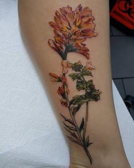 Indian Paintbrush & Monkey flower