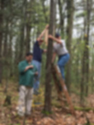 Cornplanter State Forest