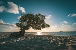 STOCK_Aruba_Dividivi3