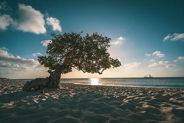 STOCK_Aruba_Dividivi3.jpg