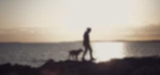 meer sonnenuntergang mann hund freiheit