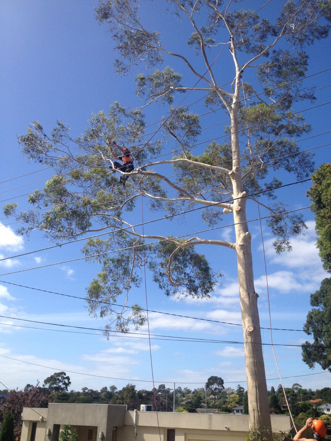 Tree removal through service wires