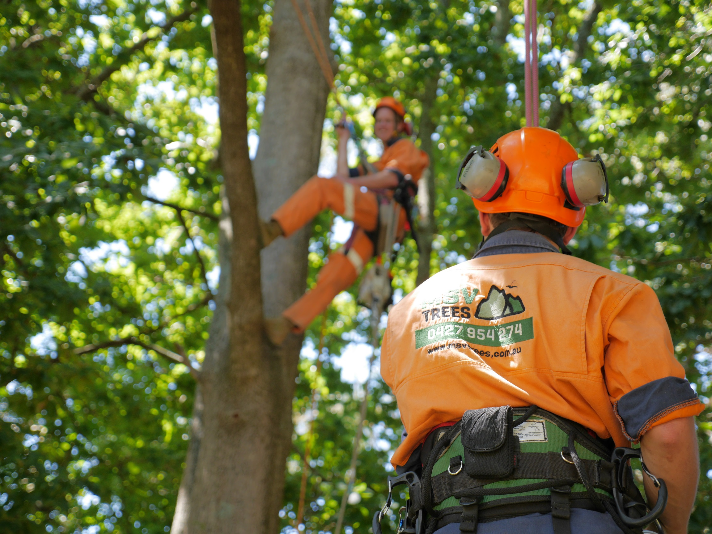 Mark and Noah Arborist services