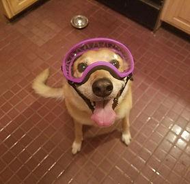 dog photo from peaceable kingdom.jpg