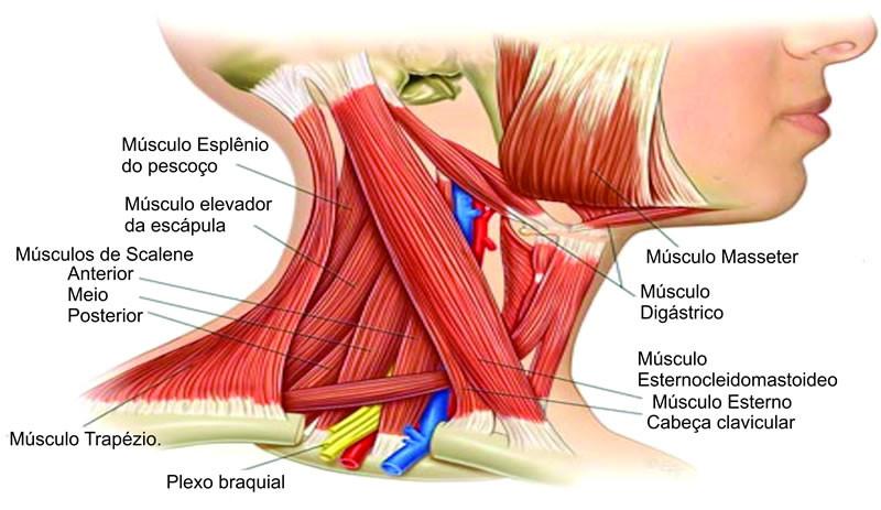 Curso Avançado de Biomecânica Craniocervical e Fisiopatologia Articular Temporomandibular com Mariano Rocabado