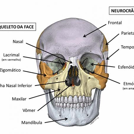 Fonoaudiologia nos Traumas de Face